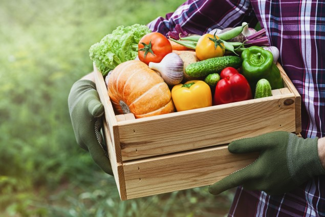 Close-up of a man wearing a check shirt and rubber gloves, holding a wooden box filled with a variety of vegetables
